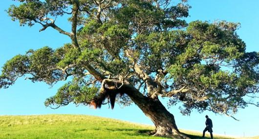 Que faire face à un arbre voisin dangereux ?
