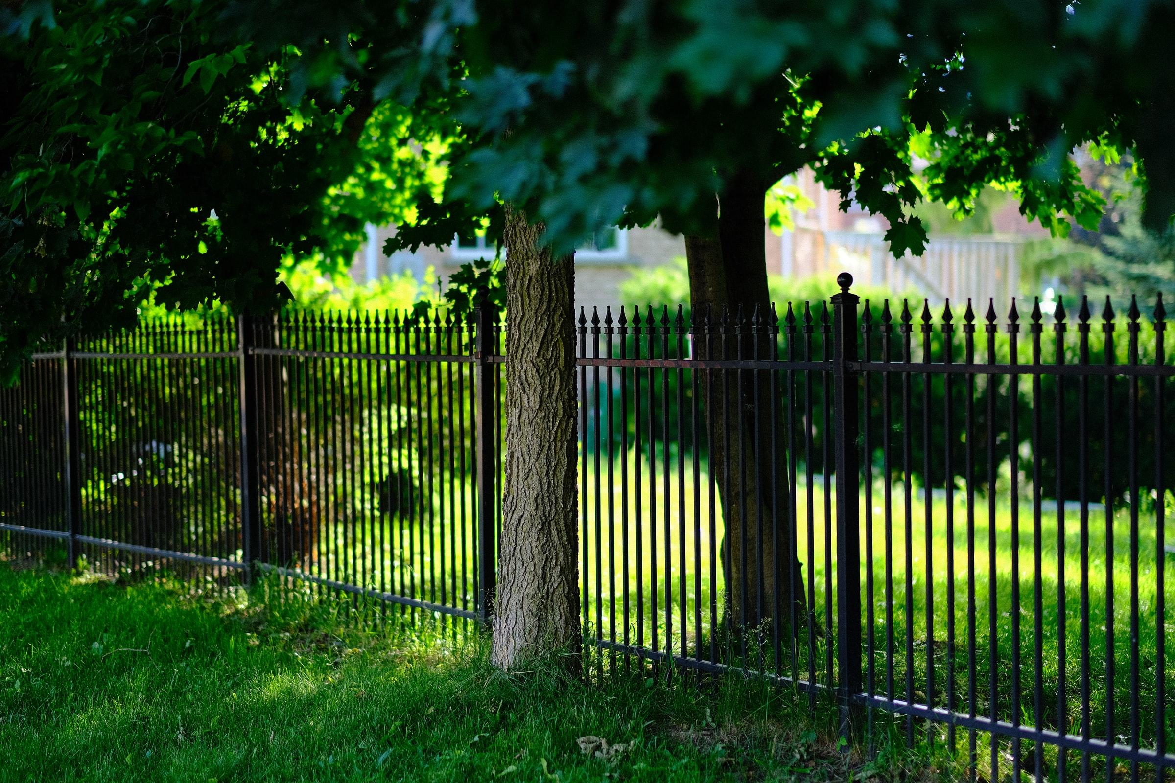 Branches et racines du voisin, que faire avec les plantations du voisin ?