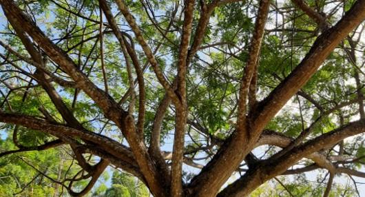 Comment obliger son voisin à couper ses arbres ?